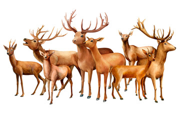 watercolor illustration, a herd of deers on an isolated white