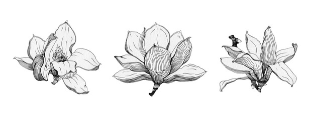 Magnolia flowers black ink set. Hand drawn graphic spring beautiful blossoms in a full bloom. Isolated on the white background.