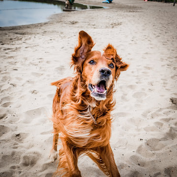 Time-lapse photography of a dog running on sand