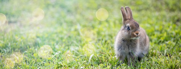 Funny little rabbit laying in the grass
