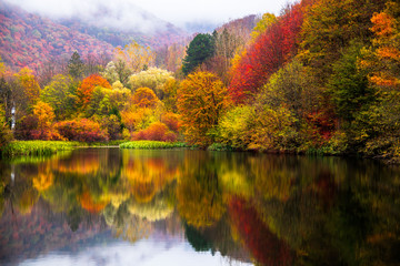 Small lake surrounded by forest with colorful plants at autumn cloudy and foggy day. Lake Grza near...