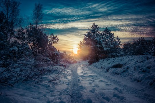 Sun setting over a snowy pathway in the middle of a forest