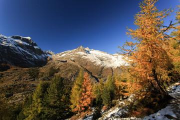 Aletschwald im Herbst zur Laubfärbung / Aletsch forest in autumn with foliage