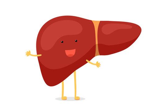 Cute cartoon healthy human liver happy emotion character. Vector funny smiling reversible exocrine gland organ mascot illustration