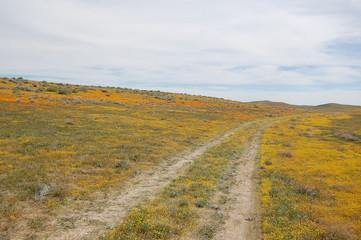 Orange California poppies and yellow goldfields, Mojave Desert, California Poppy Reserve.