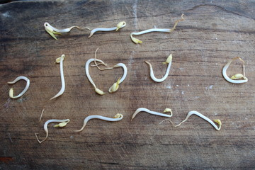 Sprouts on the wood to form the words 'I love you' - image