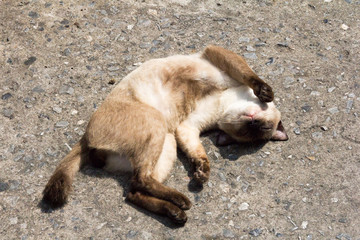 Cat sleeping in the hot sun