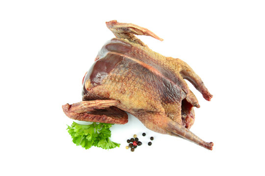 raw pigeon on a white background