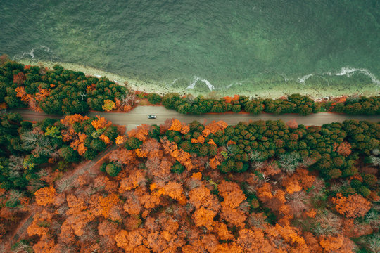 Aerial view of autumn colorful forest and road by the coast. Single car visible.