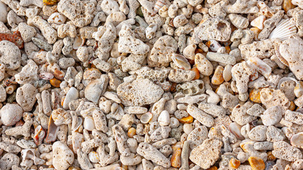 coral and shell beach texture for summer background, full hd ratio, 16 x 9