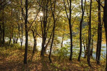 Walk in the autumn woods