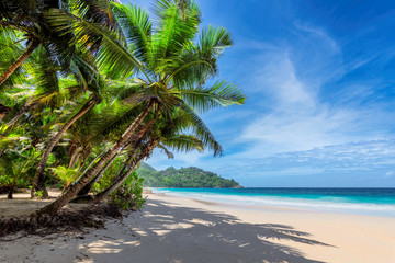 Wall Murals Beach Sunny beach with coconut palms and tropical sea. Summer vacation and tropical beach concept.