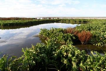 A general view shows new nature reserve Trintelzand near the Houtribdijk that contributes to improving the water quality and strengthens the ecosystem in the Markermeer in Lelystad