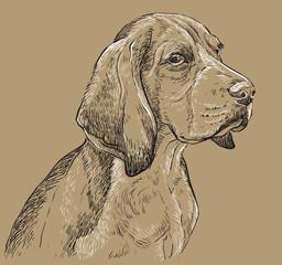 Beige Beagle vector hand drawing portrait