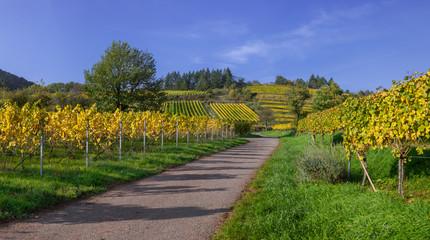 Feldweg durch Weinberge in der Südpfalz im Herbst