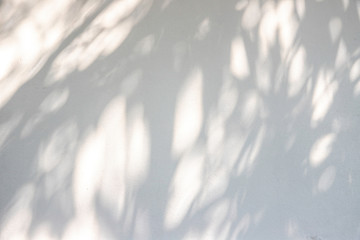 Shadow of leaf on white wall background Wall mural