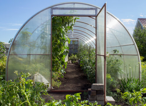 Greenhouse on small farm with plants