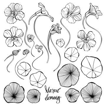 Nasturtium. Sketch.Hand drawn outline vector illustration, isolated floral elements for design on white background.