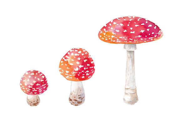 赤い毒キノコ、ベニテングダケの水彩イラスト、トレースベクター