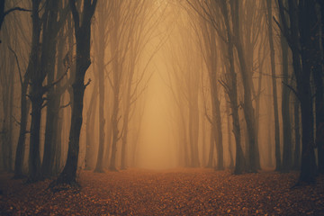 Keuken foto achterwand Grijze traf. Forest in fog with mist. Fairy spooky looking woods in a misty day. Cold foggy morning in horror forest with trees