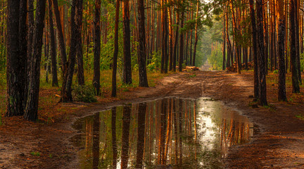 Walk in the woods. Nice, sunny weather. The rain ended, leaving large puddles in which the trees reflected.