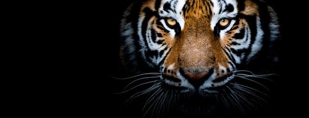 Photo sur Plexiglas Tigre Tiger with a black background