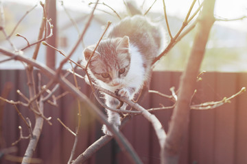Young fluffy active cat, outside playing in a tree. Wall mural