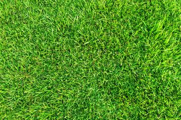 Artificial green grass background. Green grass floor texture ideal for use top view sport.