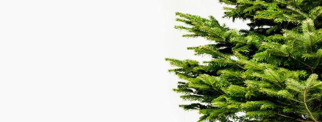 clean Christmas tree detail