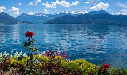 Rose und andere Blumen vor einem See mit Bergen im Hintergrund in der Schweiz