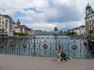 Hund vor Wasserturm in Luzern, Schweiz