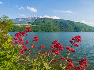 Vierwaldstätter See mit Blumen und Berg Rigi in der Schweiz