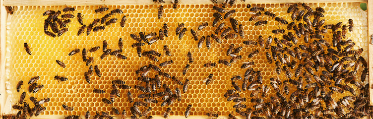 In de dag Bee Horizontal photo. Detailed view of honeycomb full of bees. Conception of apiculture
