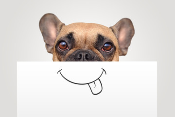 Foto op Plexiglas Franse bulldog Funny Brown French Bulldog dog with half of face covered with white paper with painted on happy mouth with tongue sticking out