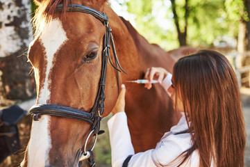 Make an injection. Female vet examining horse outdoors at the farm at daytime