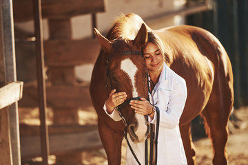 Beautiful sunlight. Female vet examining horse outdoors at the farm at daytime