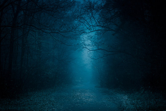Blue toned mysterious road through forest among high trees. Footpath in the dark, foggy, autumnal, misty forest.