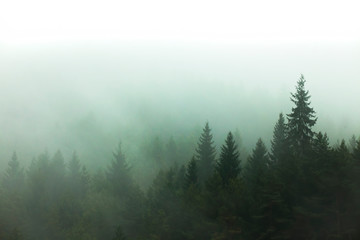 fog and mist in the forest. tree view in nature Fototapete