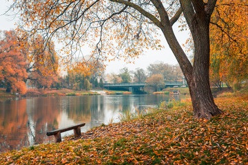 Fotobehang Meloen Colorful autumn park. Autumn trees with yellow leaves in the autumn park. Belgorod. Russia.