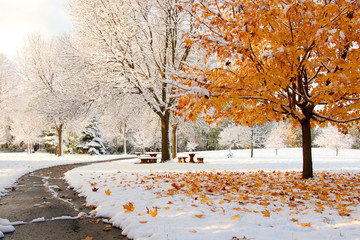 Early snow background, climate changing concept.Scenic morning landscape with bright color maple tree and fallen leaves on a fresh snow in a foreground and covered by snow tees in a small city park.