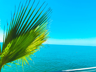 Palm tree branch against the view on beautiful sea. Summer sunny day, blue sky, water background Wall mural