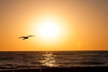 Mewa na tle zachodu słońca