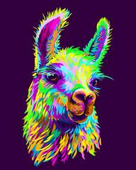 Alpaca / Llama portrait. Abstract, hand-drawn, multi-colored portrait of an alpaca / llama on a dark purple background.