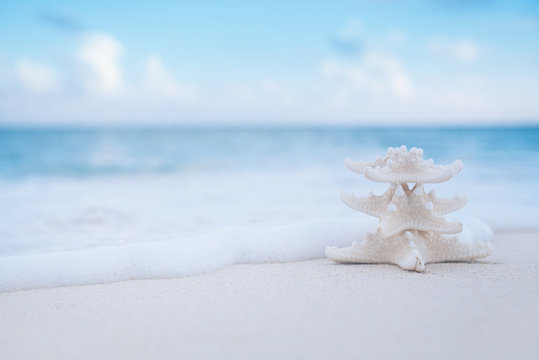 white starfish on white sand beach, with ocean sky and seascape