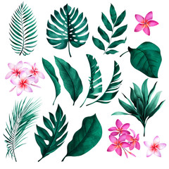 Set of tropical plants and flowers. Botanical watercolor green exotic leaves. Coconut palm, monstera, banana tree, plumeria.