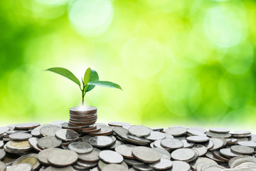 A small tree growing on a pile of silver coins Saving money and business growth