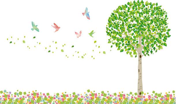 木:木 枝 自然 緑 葉 新緑 新芽 初夏 夏 春 エコ グリーン