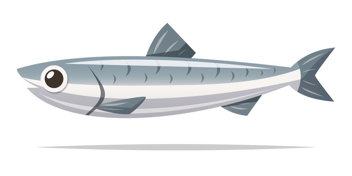 Anchovy fish vector isolated illustration