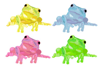 Colorful frog