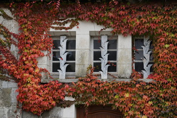 red ivy framing an interesting window